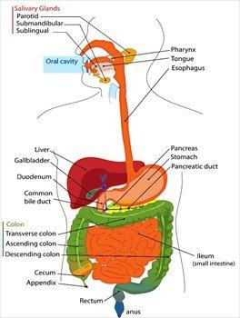 celiac disease and small intestine